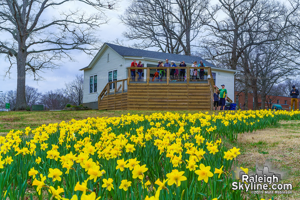 Flower Cottage at Dix with daffodils