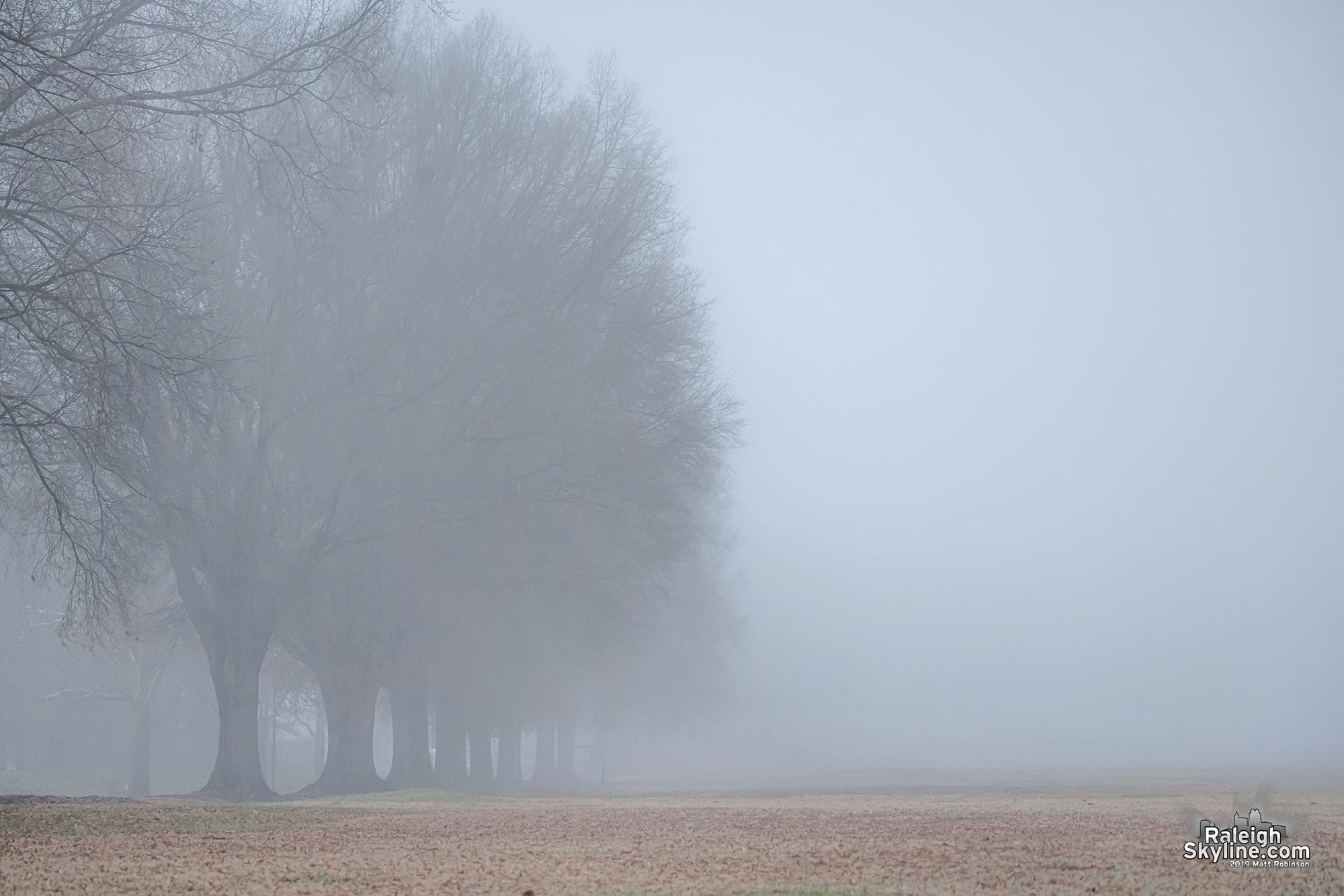 Foggy Dorothea Dix