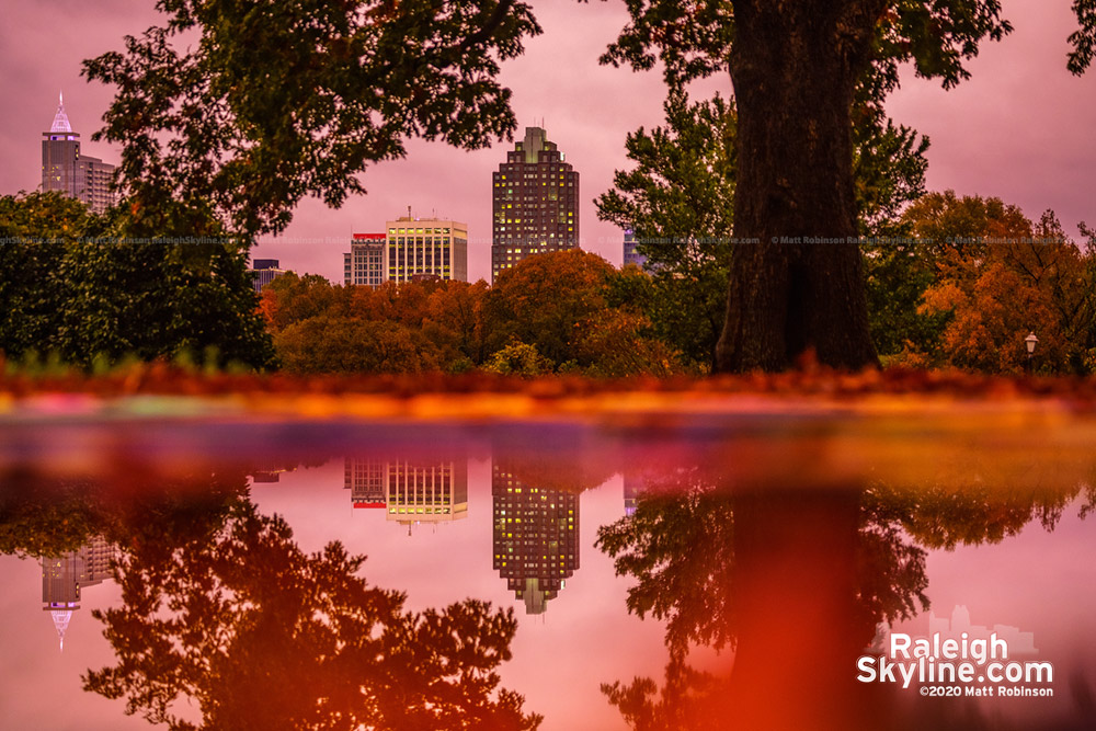 Downtown Raleigh reflects in a rain puddle tonight as the overcast sky turned pink, giving the fall colors a boost at sundown.