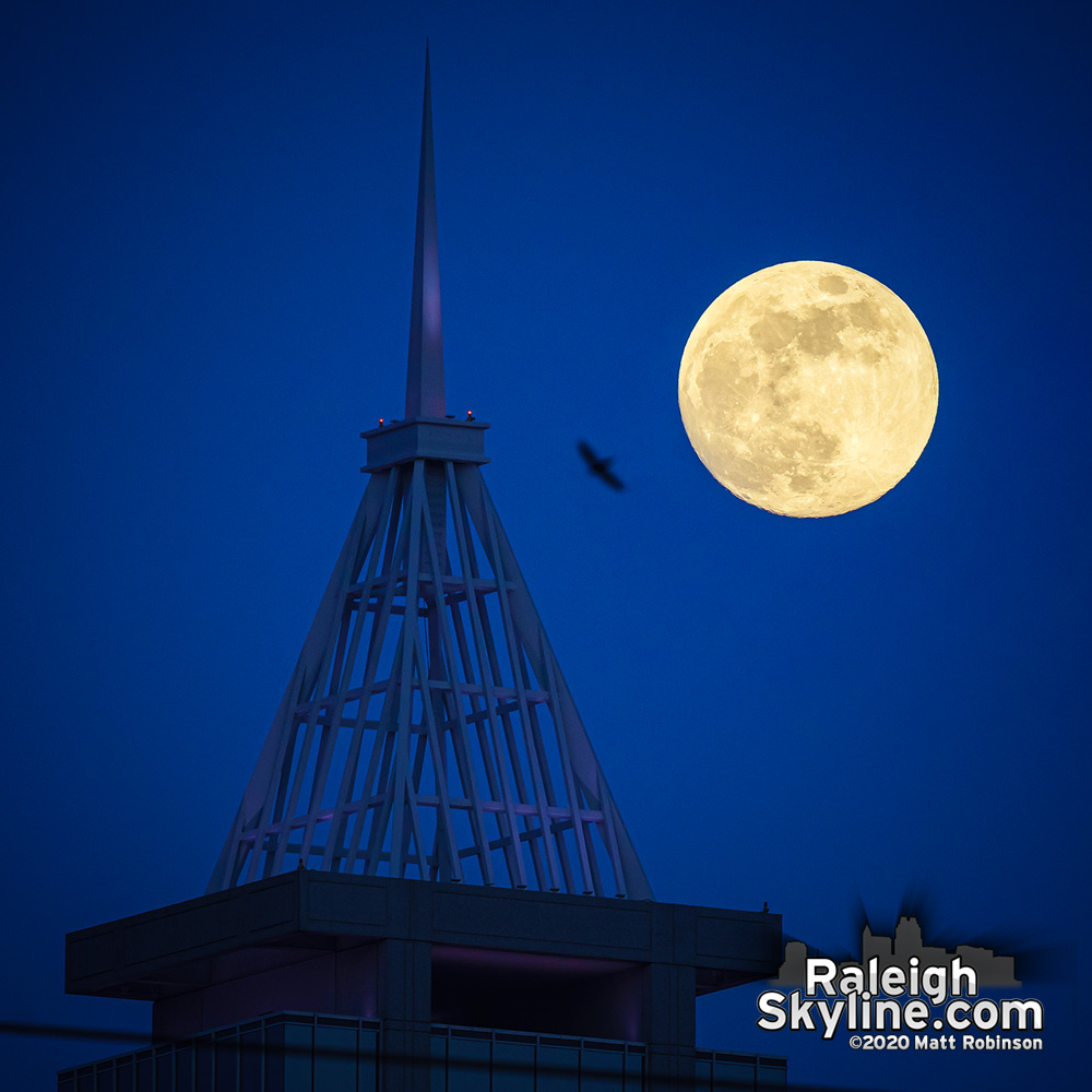 A bird flies between the rising moon and the spire of PNC Plaza in downtown Raleigh