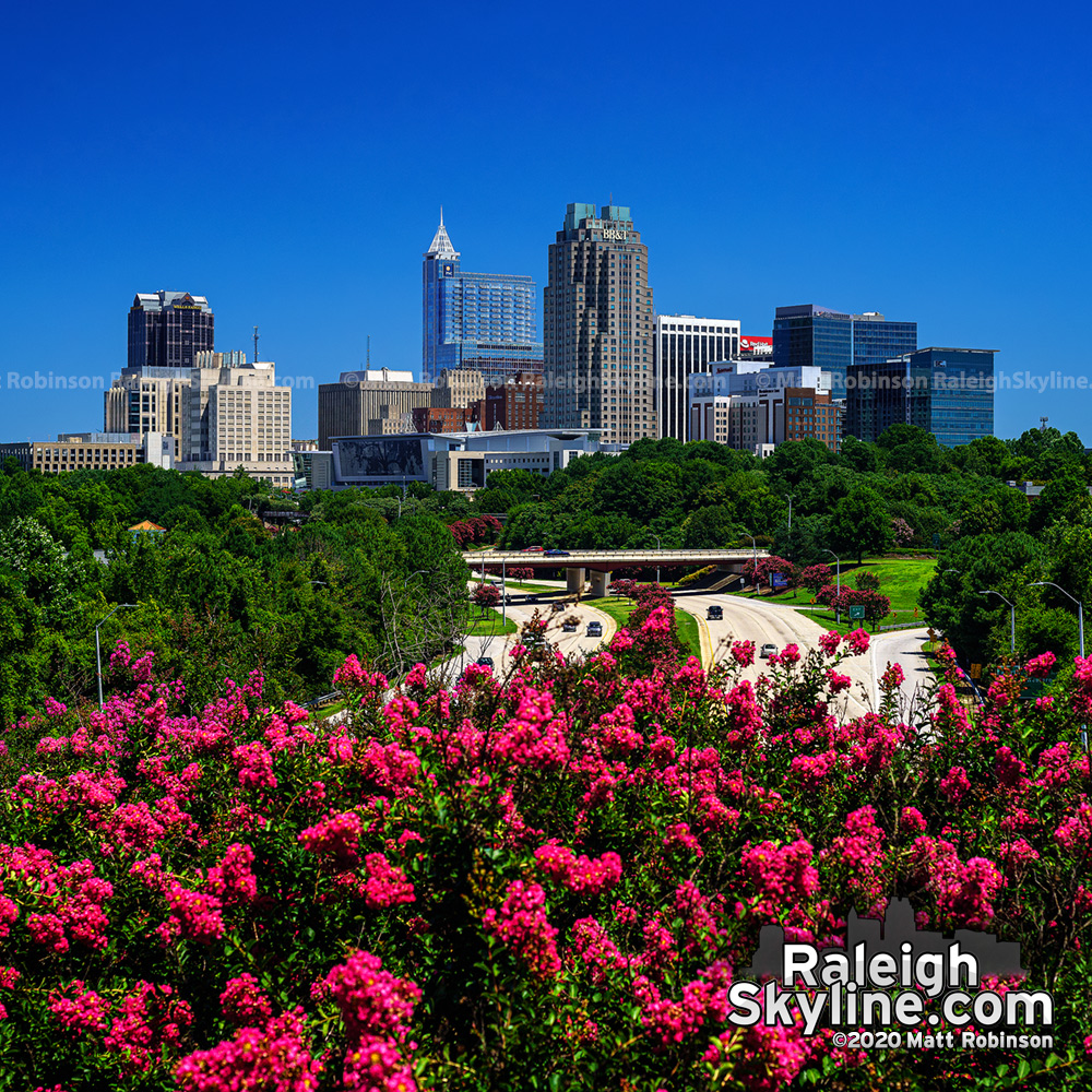 """Every year about mid-July, I wait for a clear day while the Crape myrtle trees are blooming to get the """"classic"""" daytime shot of downtown Raleigh for the year. I use my 24-foot tall tripod to raise the camera above the bright blooms to get a perspective y"""