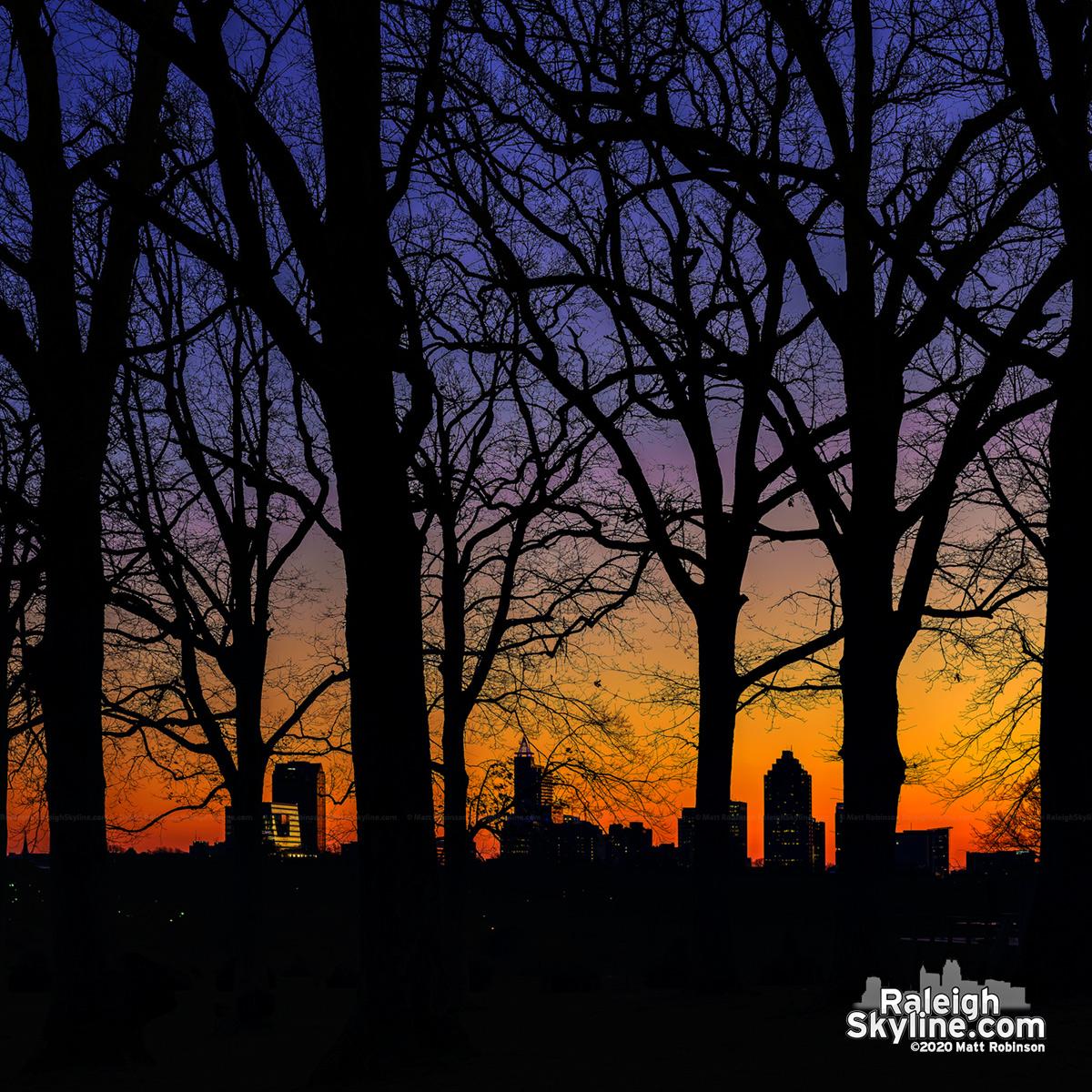 Sunrise through the trees at Dix Park