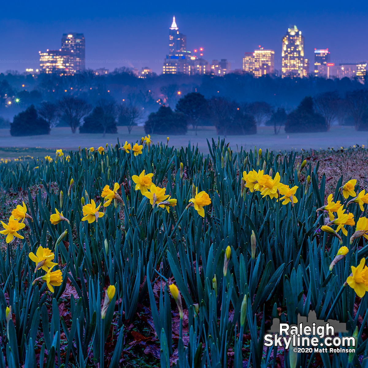 Early Daffoldils at Dix Park