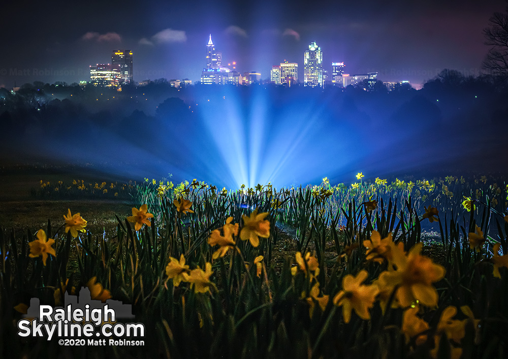 Ground fog forming tonight casts light rays behind flowers at Dix Park