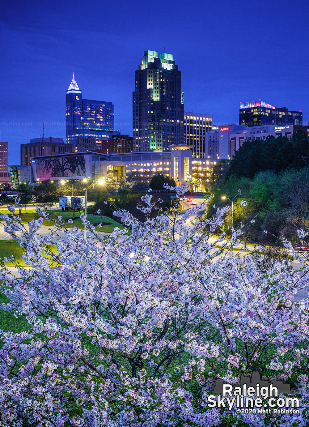 Blooming cherry blossoms provide a bright spot in Raleigh