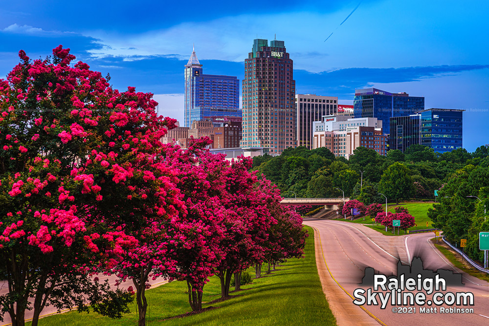 Crepe Myrtles bloom at sunset with downtown Raleigh skyline 2021